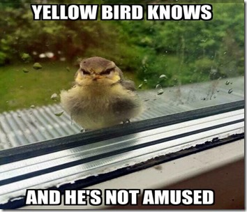 yellow-bird-knows